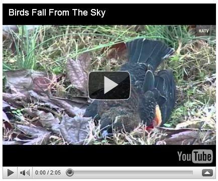 Dead Birds Fall from Sky