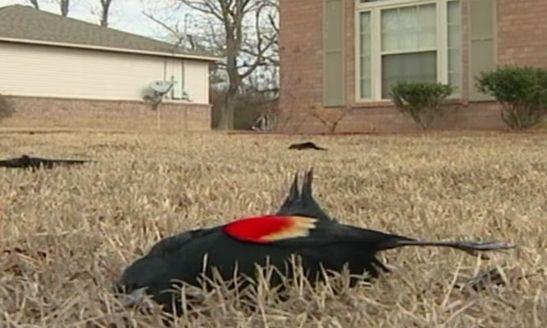 Dead Birds Arkansas